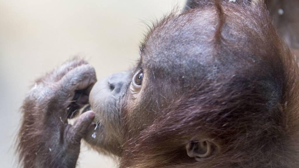 Tiere lernen durch Beobachtung und aus Erfahrung