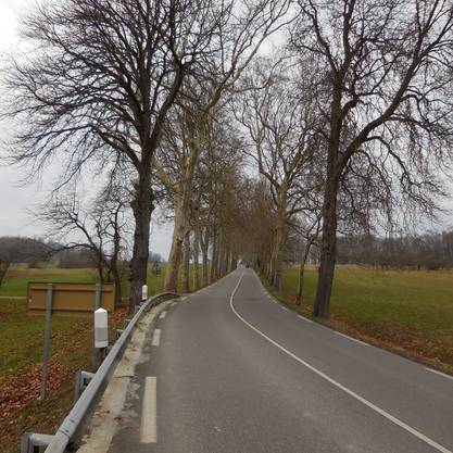 Hunkeler auf dem Weg ins Elsass, Papellallee auf dem Weg zur Anhöhe Trois Maison.