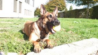 Polizeihund Kiwi und Barbara Breitschmid