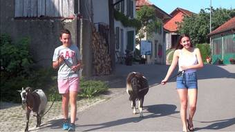 Touristen in der Schweiz – Youtube