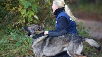 Hundeprüfung