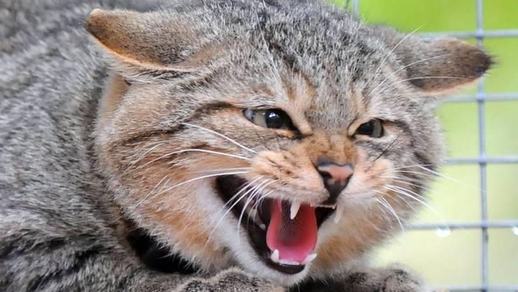 """Die abgebildete Katze ist nicht Eowyn - das Antlitz der wahren """"Catzilla"""" ist unbekannt."""