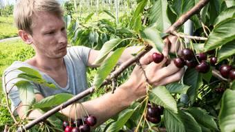 Arbeit als Erntehelfer auf dem Hof Habsen