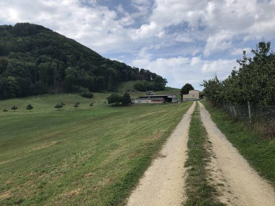 Der Weg zum Lindenhof.