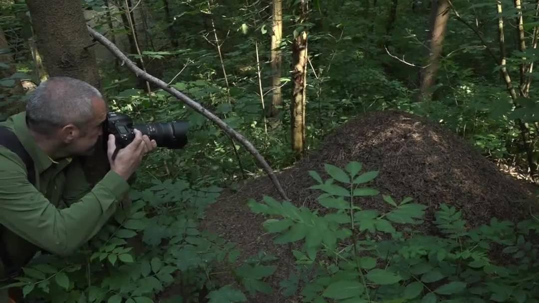Freiwillige Basler und Baselbieter haben Waldameisen gezählt