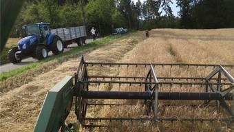Der Mähdrescher fährt das Emmer-Feld ab und erntet das Getreide für Bäcker Buki Kreyenbühl. Bild: Eddy Schambron