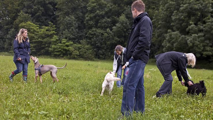 Der Kantonsrat will die obligatorischen Hundekurse abschaffen. (Symbolbild)