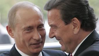 Der russische Präsident Wladimir Putin und der deutsche Altkanzler Gerhard Schröder sind gut miteinander befreundet. Jetzt hat Putin Schröder zum 75. Geburtstag herzlich gratuliert und ihn gewürdigt. (Archivbild)