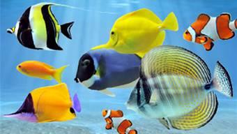 Auch unter Wasser herrscht eine lebensnotwendige Artenvielfalt. zvg