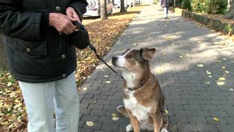 Basler Hundehalter haben Angst vor dem Hundehasser