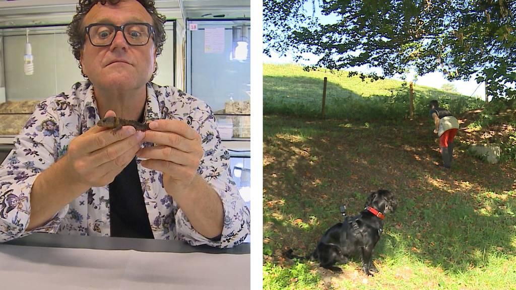 Hausbesuch vom Tierarzt / Nasentraining für den Hund