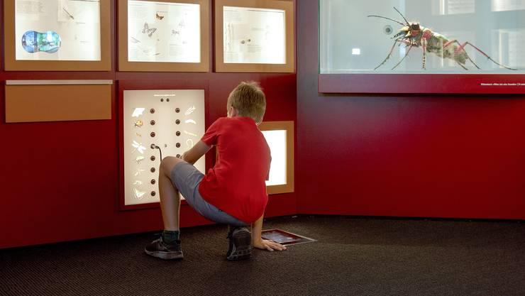 Einblick in den Insektenraum im Naturmuseum