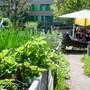 """ARCHIV - Blick in den Gemeinschaftsgarten Himmelbeet in Wedding. (zu dpa """"EU-Umweltagentur: Städte müssen sich stärker an Klimafolgen anpassen"""") Foto: Jens Kalaene/dpa-Zentralbild/dpa"""