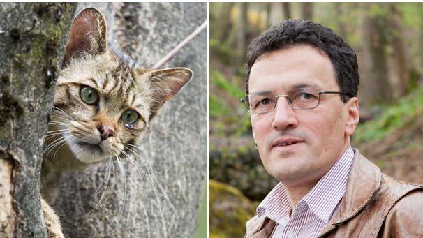 FDP-Grossrat Johannes Jenny will Katzenbesitzer zur Kasse bitten.. (Symbolbild)