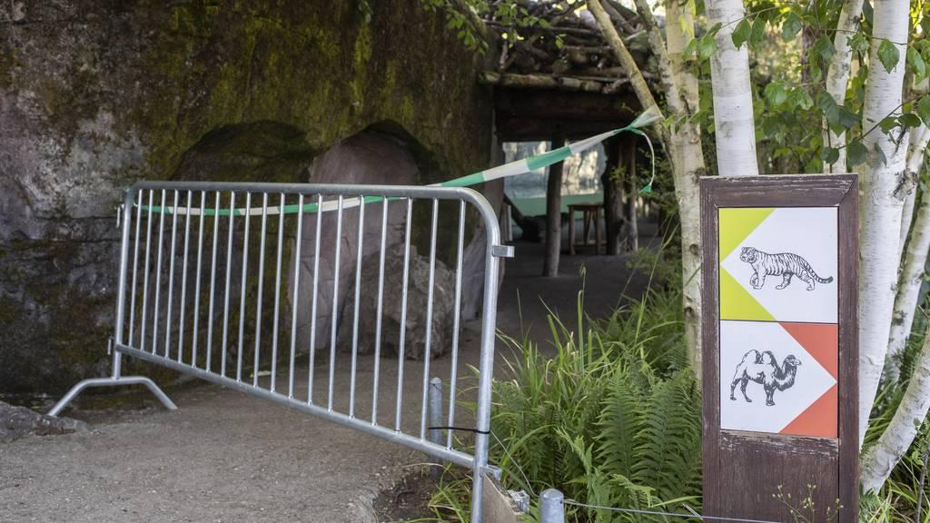 Polizei sucht nach Tigerangriff Zeugen