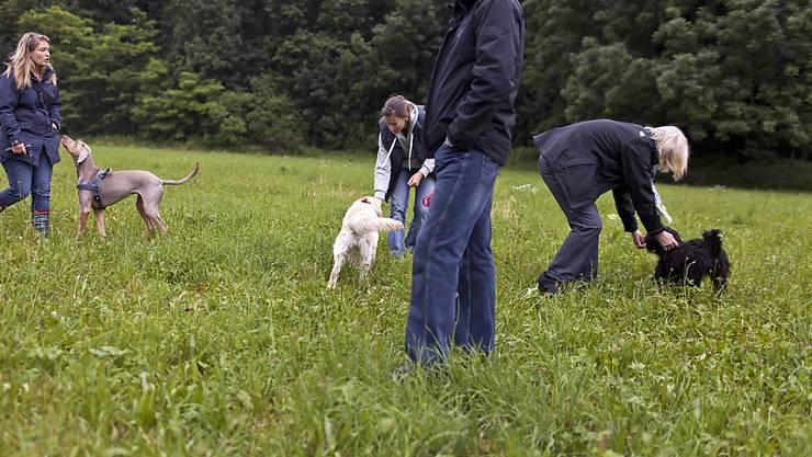 Obligatorische Kurse für Hundehalter: Wer teilnimmt, ist meist zufrieden. Allerdings schwänzt jeder Fünfte. (Archivbild)