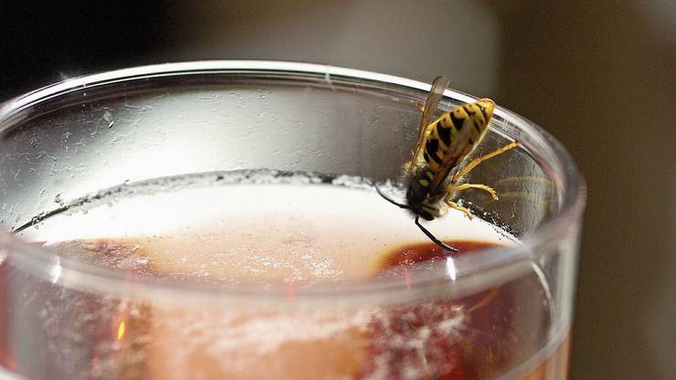 Beim Trinken sollte man aufpassen, dass keine Wespe im Glas ist.