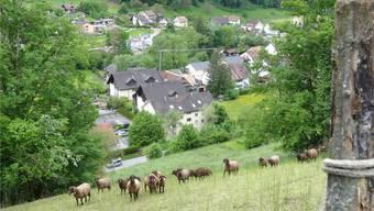 Das Dorf soll kompakt bleiben und das Zentrum gestärkt werden: Ueken hat die Nutzungsplanung Siedlung und Kulturland revidiert. chr