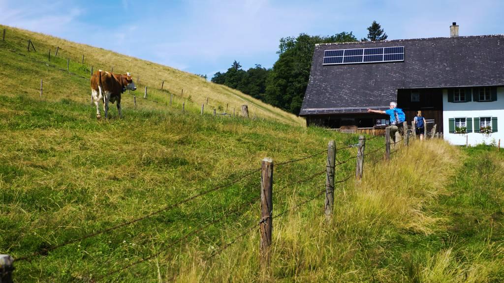 Kuh-Attacke, Schlangenbrot und ein märchenhaftes Tobel: Wanderful im Zürcher Oberland