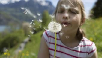 Wie können Pusteblumensamen so stabil durch die Luft fliegen? Dem sind Forschende auf den Grund gegangen. (Archivbild)