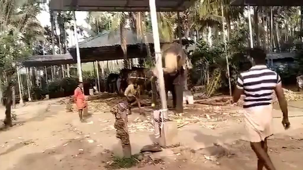 Elefant spielt Cricket – nicht alle finden es gut