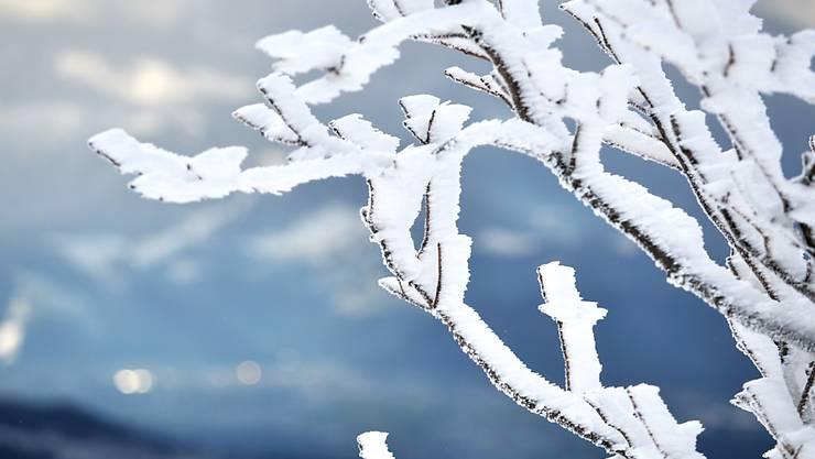 Sehnsüchtig erwartet von vielen Kindern, Schneesportlern, Tourismusbetrieben. Bergbahnbetreibern und ihren Angestellten; doch zum Beispiel Gehbehinderte, Wildtiere und Vögel können gut auf ihn verziechten: den Schnee (Symbolbild)