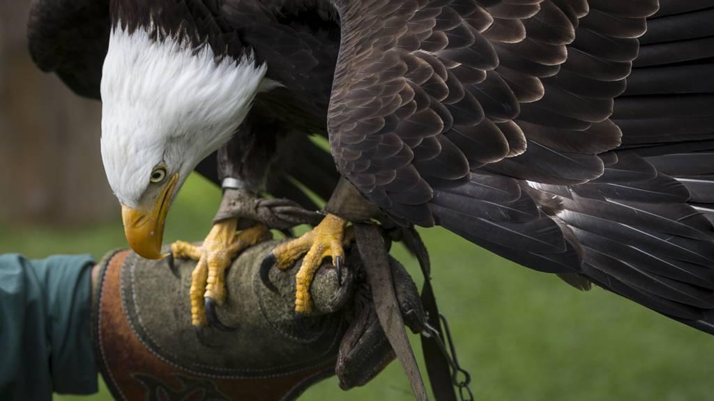 Greifvogelpark erreicht Spendenziel mit 45'000 Franken