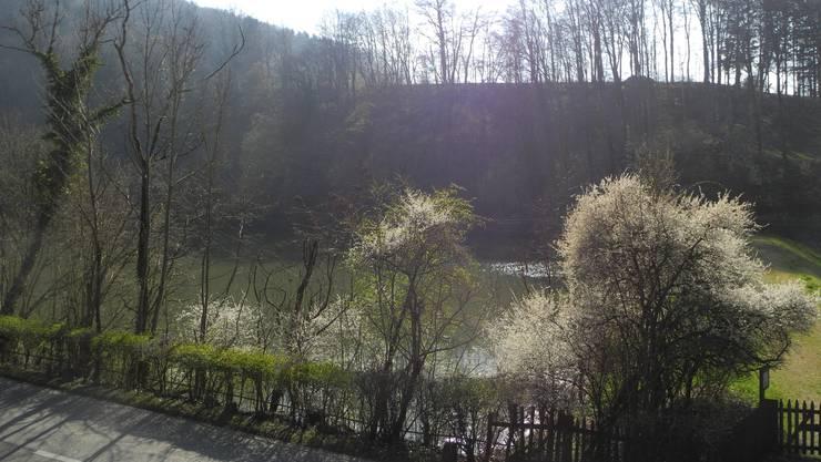 Das Gebiet um den Baslerweiher in Seewen beherbergt grosse Populationen von Erdkröte, Grasfrosch und Geburtshelferkröte.
