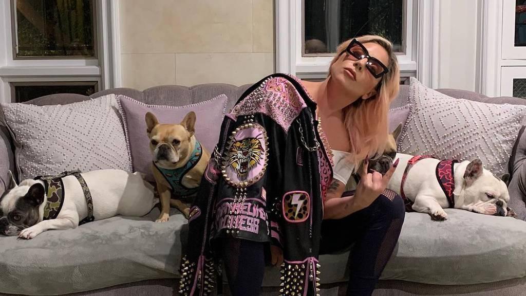 Fünf Verhaftungen nach Raub von Lady Gagas Hunden