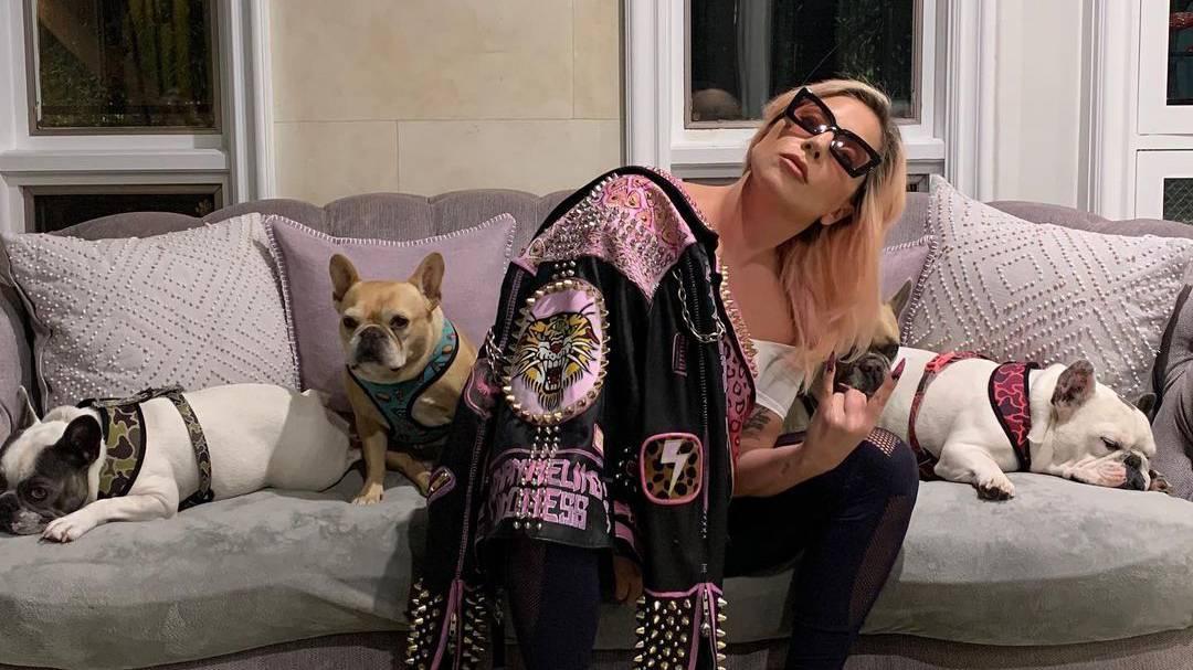 Zwei von Lady Gagas Hunden wurden Ende Februar entführt.
