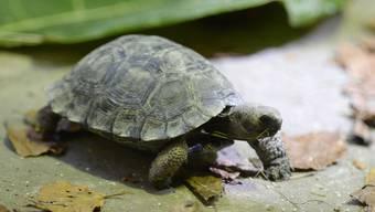 Eine falsche Wärmelampe setzte das Gehege der Schildkröten in Brand. (Symbolbild)