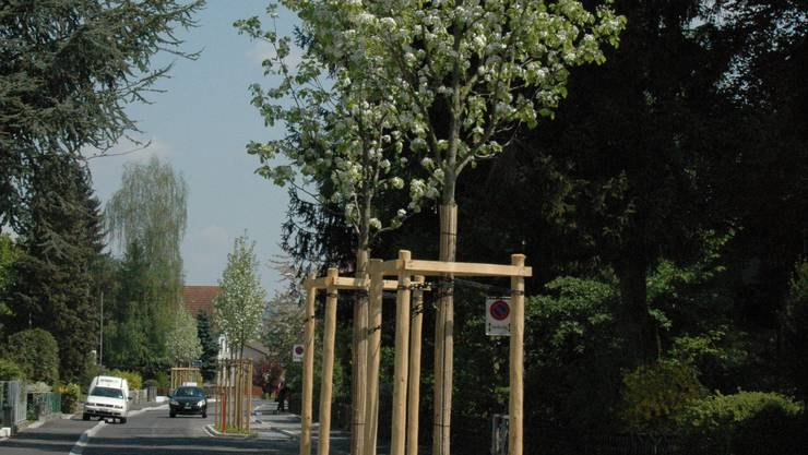 In Blüte: Neue Bäume auf der sanierten Urdorferstrasse. (dvk)
