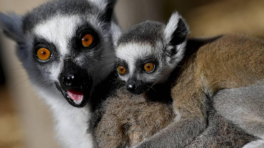 Viele Wildtierarten sind weiterhin bedroht