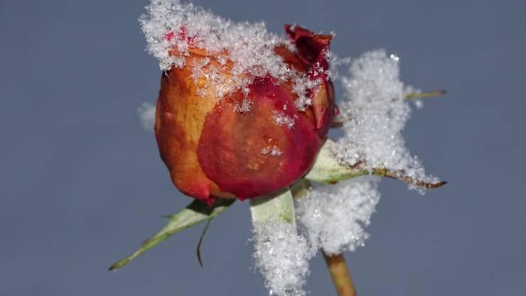 """Heute in unserem """"Wintergarten"""""""