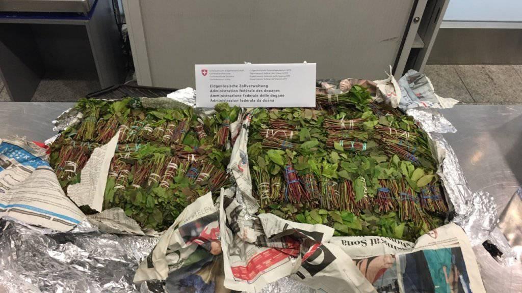 Am Flughafen Zürich sind im Juni grosse Mengen von Raucherwaren sichergestellt worden. Ein Holländer hatte 32 Kilogramm Kath in seinem Koffer.