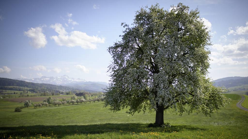 Umweltpreis der Albert Koechlin Stiftung 2020 geht an Obstsaft-Produzenten und Permakultur-Berater