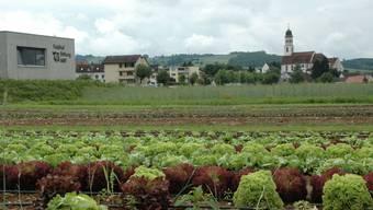 Das schlechte Wetter hat Auswirkungen auf den Gemüse-Anbau - zum Beispiel auf die Salatköpfe des Feldhofes der Stiftung MBF in Frick.