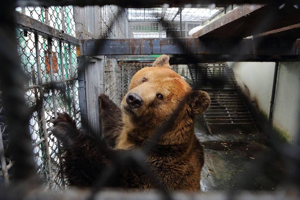 Albanische Braunbären für Arosa (© Stiftung Arosa Bären / Stefan Eichholzer)