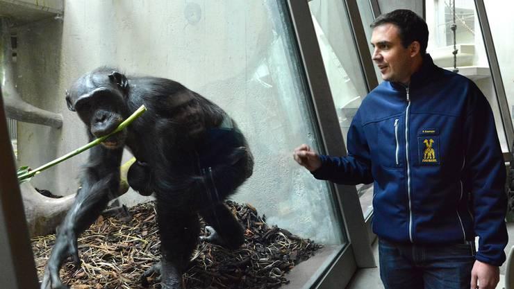 Die Schimpansendame Benga begrüsst Adrian Baumeyer. Der verstorbene Eros hat dies nur getan, wenn ihn der Kurator alleine besuchte.