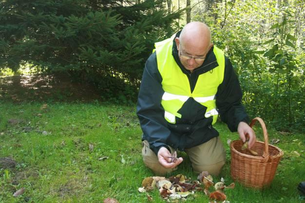 Pilzclub-Mitglied Andreas Baumgartner sortiert seine Funde.