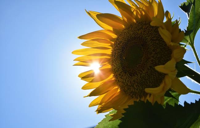 Meine Sonne im Garten.