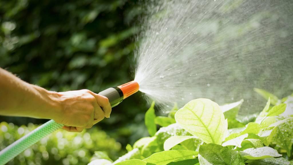Wasser war im Hitzesommer 2018 ein kostbares Gut, gewisse Gemeinden sind sehr verschwenderisch damit umgegangen.