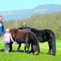 Die Ponys vermissen den Kontakt zu den Kindern, aber auch zu den Menschen, die zu Therapiezwecken kommen.