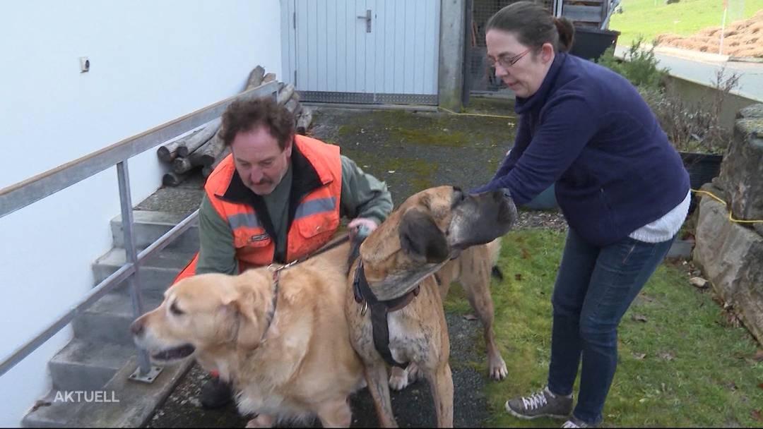 Tierische Helden: Hunde alarmieren Bewohner bei Hausbrand