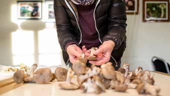 Die Pilzkontrolleure in der Region haben derzeit alle Hände voll zu tun – die Saison sei «ausgezeichnet» angelaufen, sagt Eugen Zulauf aus Möhlin. (Symbolbild)