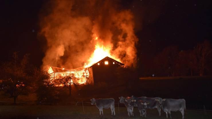 Die Milchkühe befanden sich zum Zeitpunkt des Brandausbruchs nicht im Stall.
