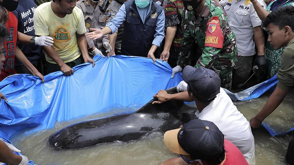 Dutzende Grindwale vor indonesischer Insel verendet