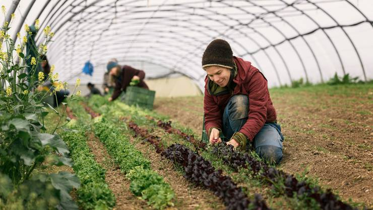 In der Schweiz angebautes Gemüse statt Fleischimporte: Die Schweizer Bevölkerung soll sich nachhaltiger ernähren (Symbolbild).