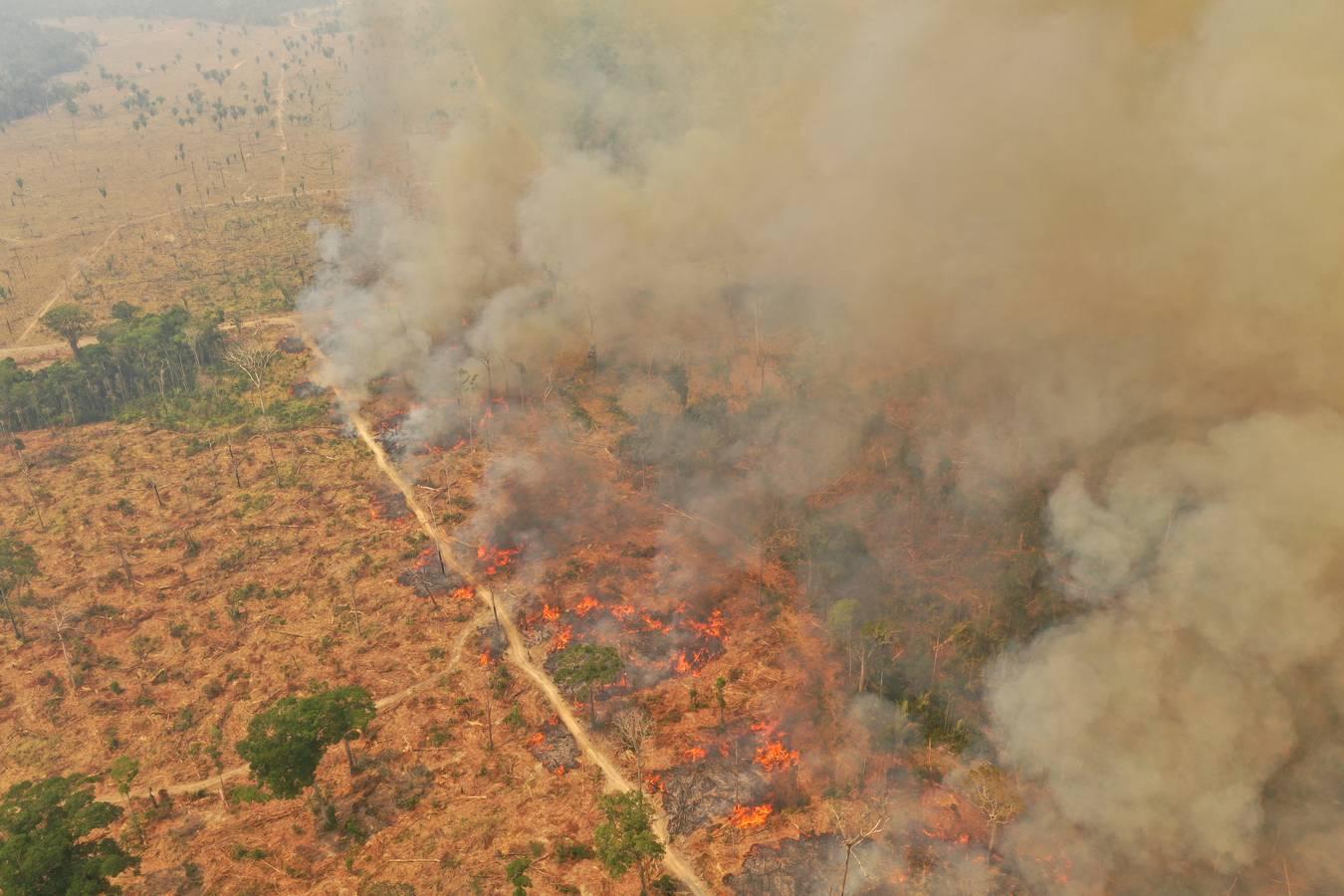 Brände im Amazonas: Die Lage in Brasilien und Bolivien ist dramatisch. (© Michael Dantas / WWF Brasilien)
