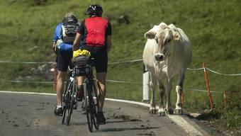 Rund 1'000 Kuehe grasen auf dem Urnerboden, der groessten Kuhalp der Schweiz, am Mittwoch, 10. Juli 2019, in Spiringen. Nach ca. vier Wochen ist das Gras auf dem Urnerboden jeweils abgeweidet und die Kuehe werden in hoeher gelegene Alpen gebracht. (KEYSTONE/Alexandra Wey)
